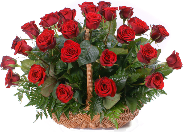 red-roses1.png